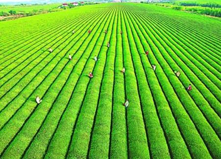 农业供给侧改革带来投资机会 重点关注两主线