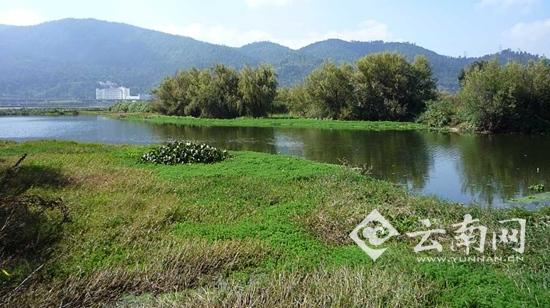 入草海河道已全面实施生态补偿   据介绍,位于滇池北部的草海,因湖域深入市区,成为了春城市民亲水戏水的主要区域,也正因如此,在滇池受到污染时草海也成为重灾区,遭受了毁灭性的破坏。   2015年底,昆明开始实施草海及周边水环境提升综合整治工作并立下军令状:到2020年,草海水质稳定达到地表水类标准,透明度提高到100厘米以上,水体对人体无害,实现市民亲水近水的需求。   云南网(微信:yunnancn)了解到,今年4月,为强化滇池流域水环境保护治理,落实滇池流域河道保护治理主体责任,昆明市建立了滇