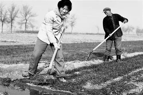 改革盛开初期,河北省廊坊市大城县东近北村全靠人造灌溉幼麦,因袭着大水漫灌式的落后生产手段。 (摄于1980年12月)