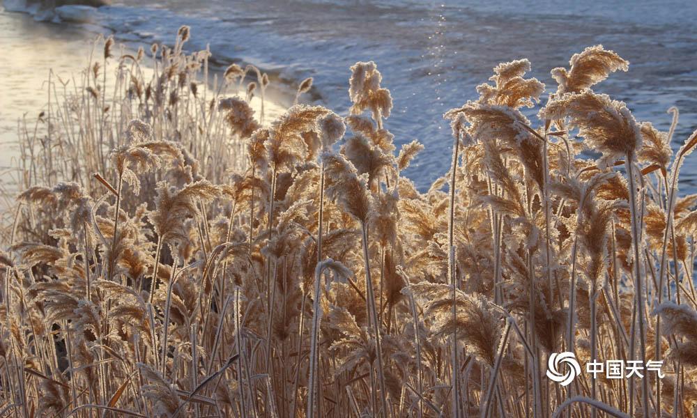 1月31日朝晨,甘肃高台县城最低气温降至-20.2℃,受此影响,高台县黑河湿地新区泛起雾凇景观。河面上云蒸霞蔚,河滨玉树琼花,置身其间,恰似走进不染纤尘的童话天下。(图高博 文杨丽�)