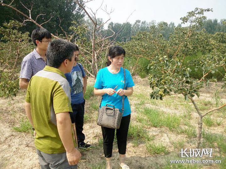 高俊英(右一)在山楂林给果农讲解果树管理技术. 清河县委宣传部供图图片