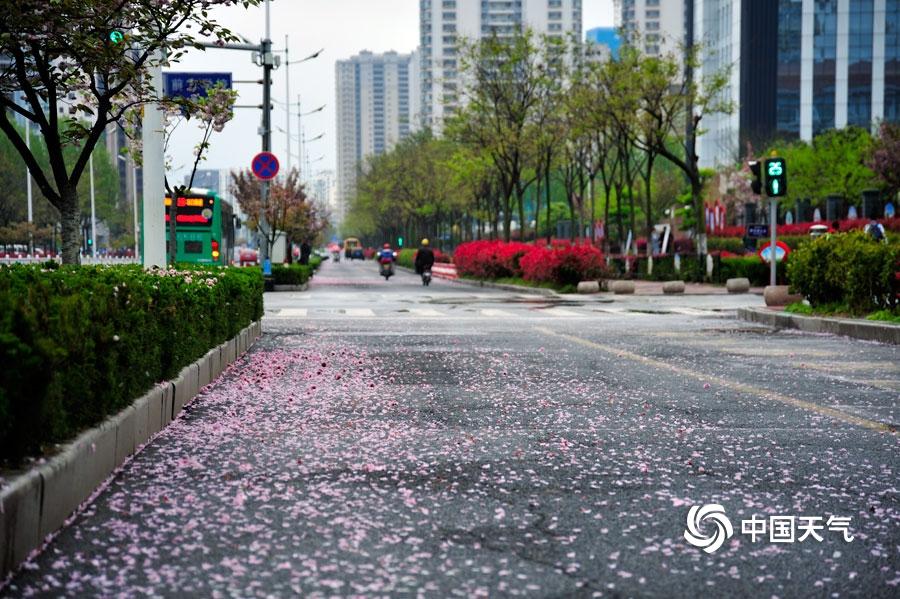 山�|日照喜迎春雨 花雨交�一路�L景_巴某