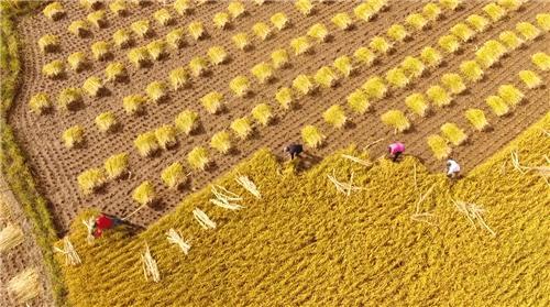 (过去一年,河南省农产品通过阿里经济体全平台销售额超过100亿元,同比提高94%)