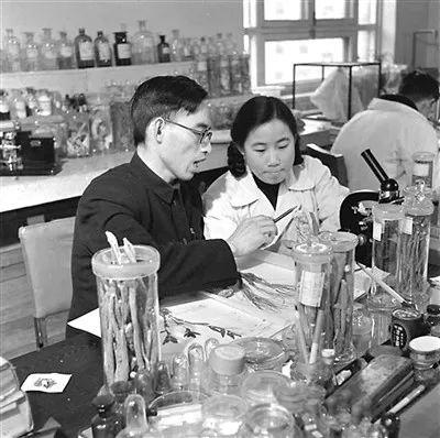 上世纪50年代,在中医研究院中药研究所任研究实习员的屠呦呦(前右)与老师楼之岑一起研究中药。