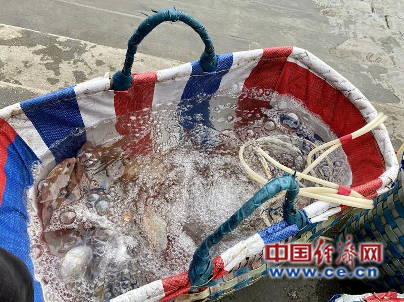 南澫中央渔港渔民打捞上来hg0088官网鱼货 经济日报-中国经济网记者 贾佳/摄