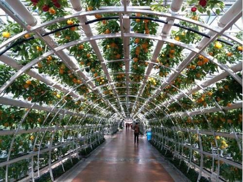 寿光蔬菜高科技示范园