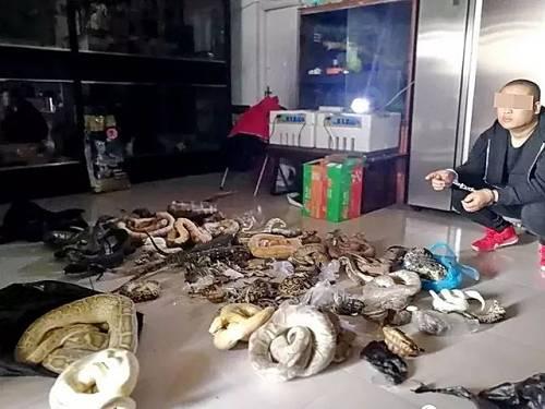 吉林一个波及全国的非法贩卖野生动物网络。资料来源:森林公安