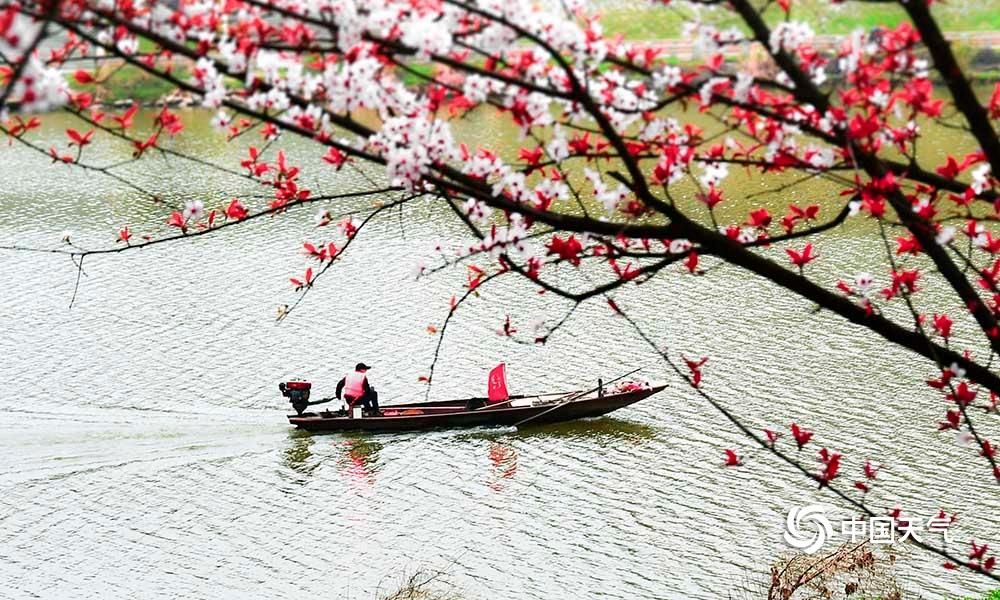 湖南衡阳:蒸水河畔春花盛开 春景如画