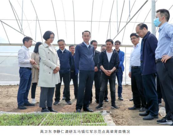 高卫东李静仁调研茅台酒酿造用有机高粱高标准种植示范基地