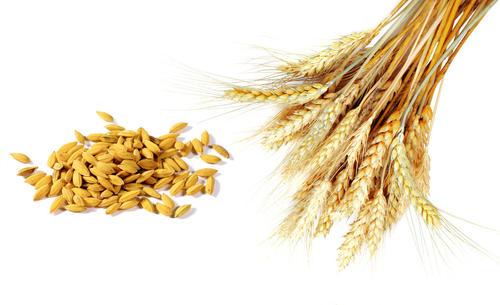 湖北安徽启动小麦最低收购价执行预案