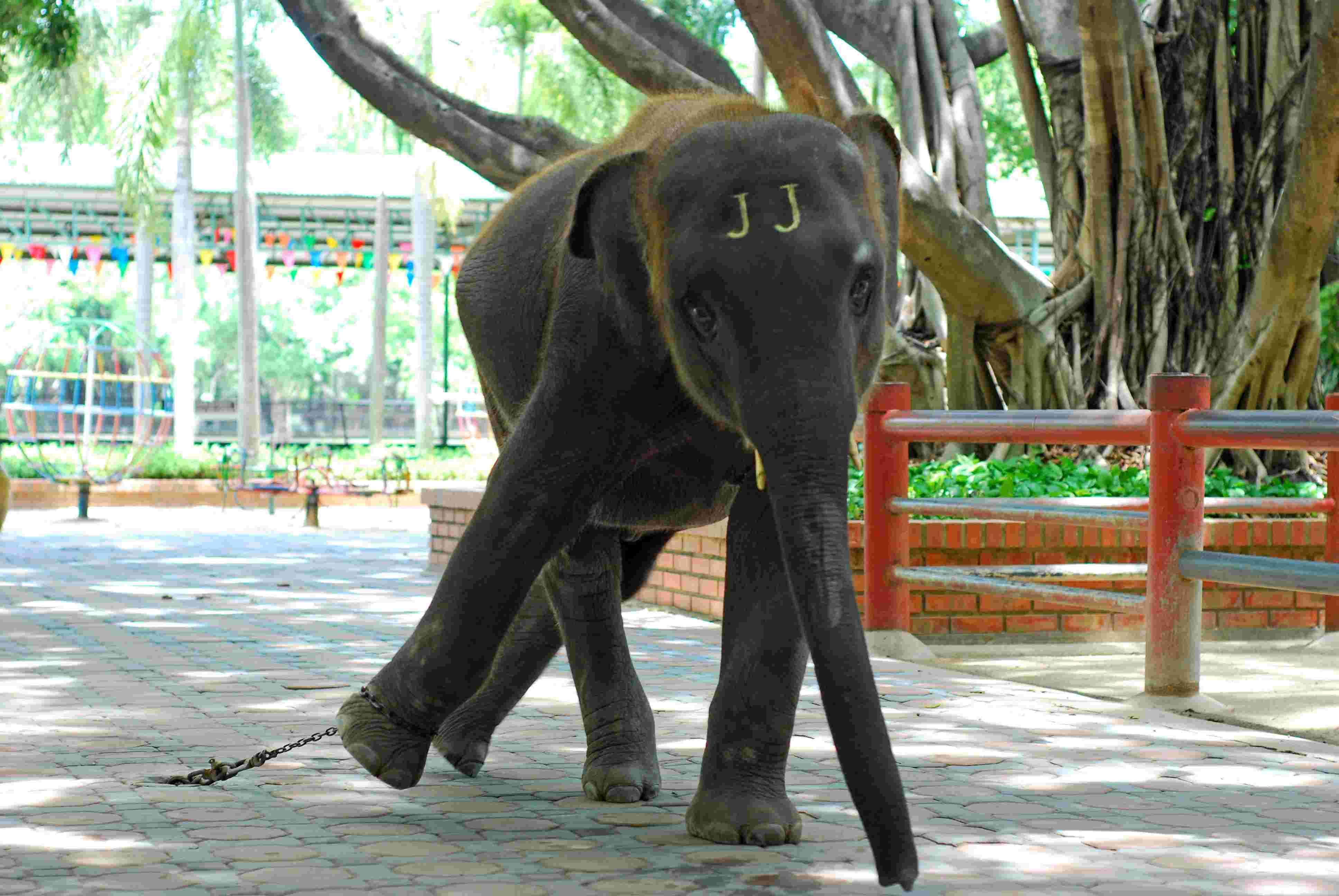 世界动物保护协会发布报告,九成旅游业圈养大象福利状况堪忧