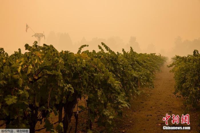 特朗普批准加州因山火进入重大灾难状态