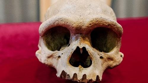 英媒:哈尔滨龙人头骨发现90年后方震惊世界 或改写人类进化历史