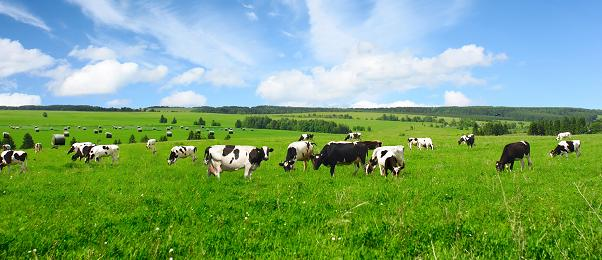 优然牧业上半年净收好预添50%至60%  乳业上游市场龙头价值凸显