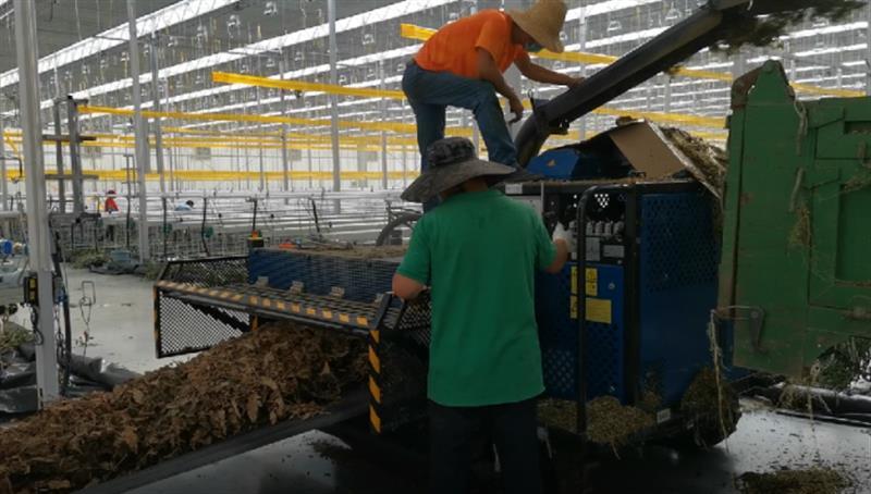 北京市农业技术推广部门提醒:连栋温室工厂化番茄产后温室需清理及消毒