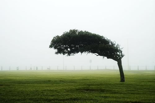 北京等13省市部分地区或有8至10级雷暴大风:风速比博尔特还快