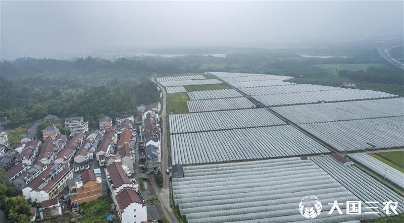 浙江仙居:发展设施农业 促进共同富裕