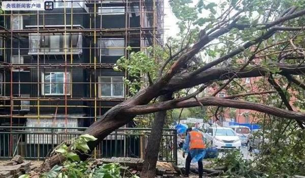 大连出现11级瞬时大风 海浪拍岸蔚为壮观:市中心305株树木倒伏